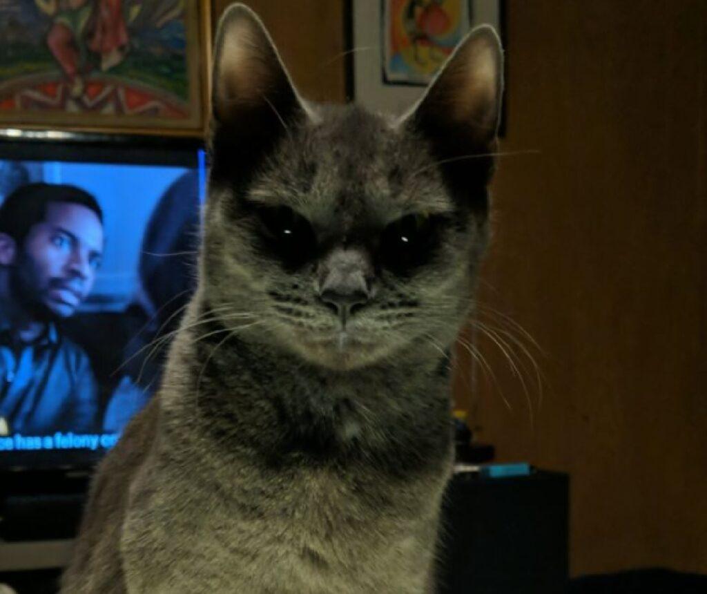gatto occhi neri terrore