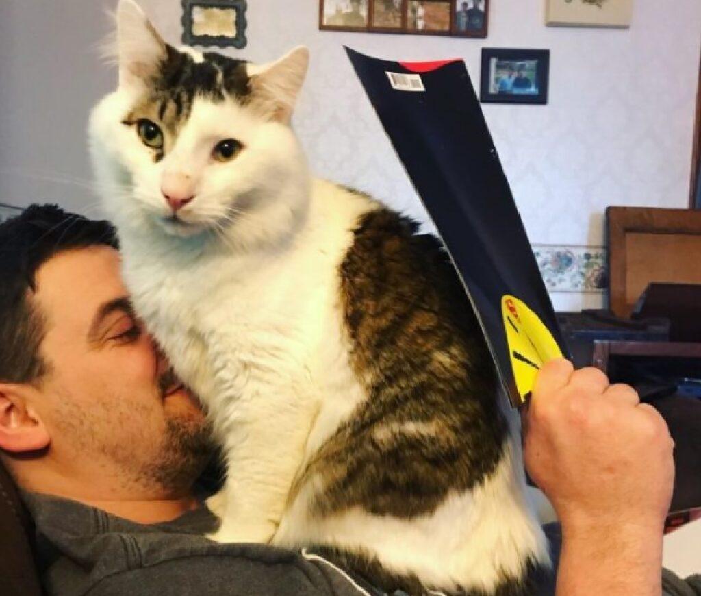 gatto siede faccia uomo
