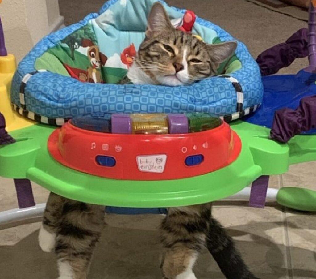 gatto entra dentro posto bambini