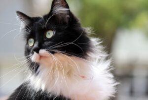 gatti che combattono seccatura in modi unici