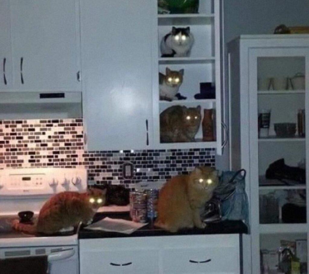 gatti fanno festa di nascosto
