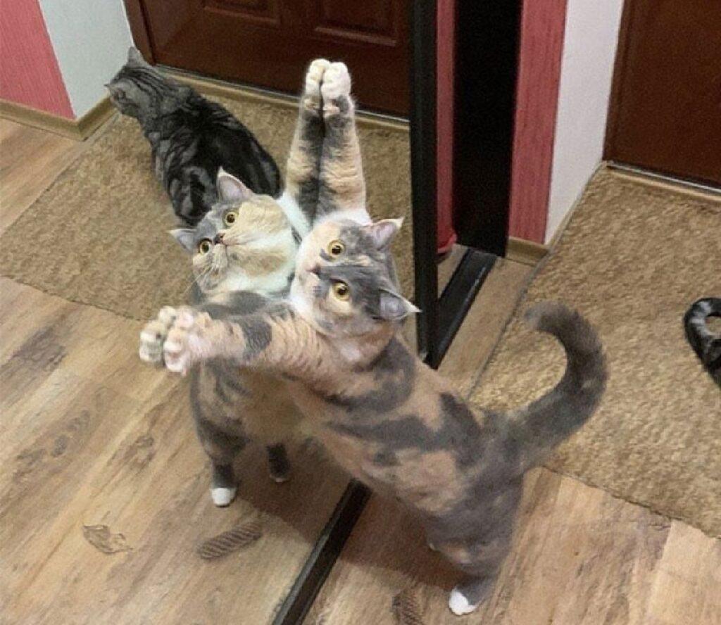 gatto vetro amico spalle