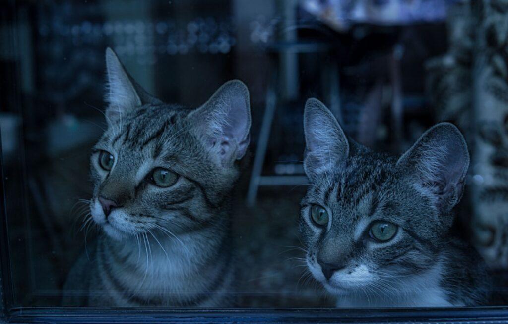 gatti che dimostrano come averne due è meglio