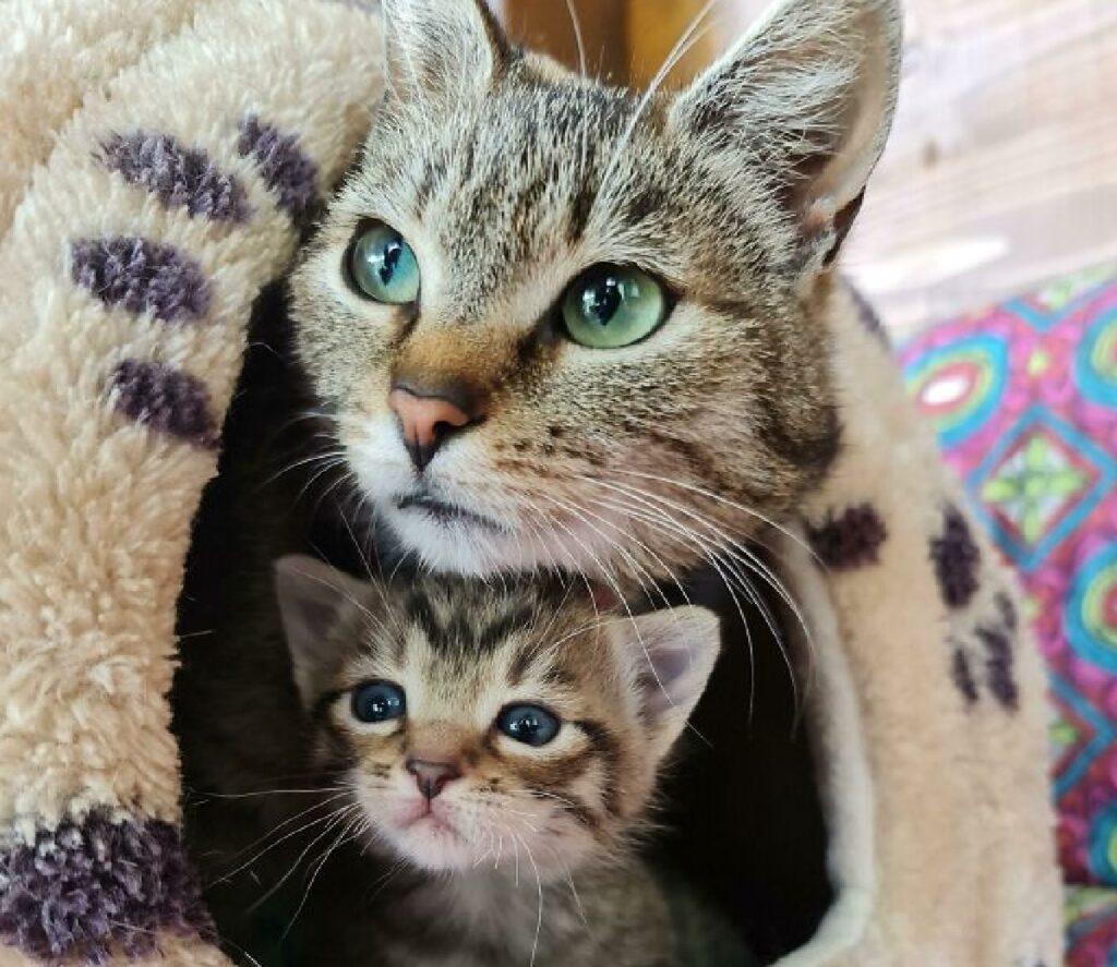 gatti madre figlio dentro cuccetta