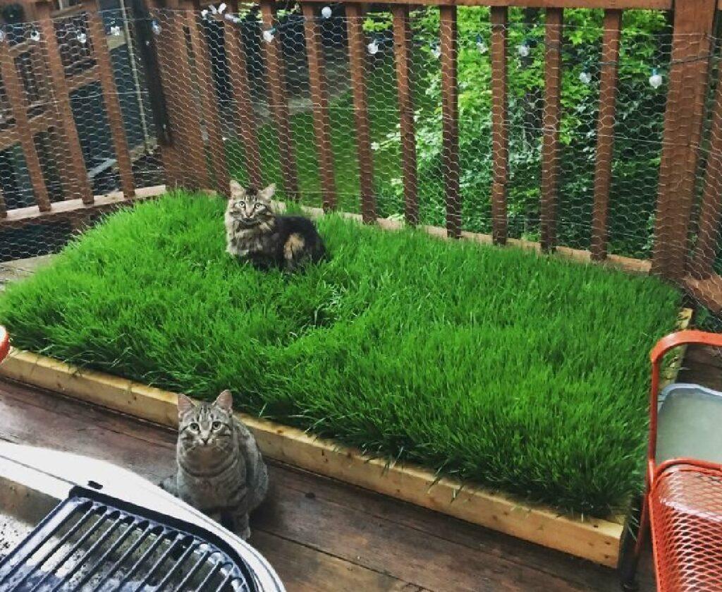 coppia gatti su mini prato