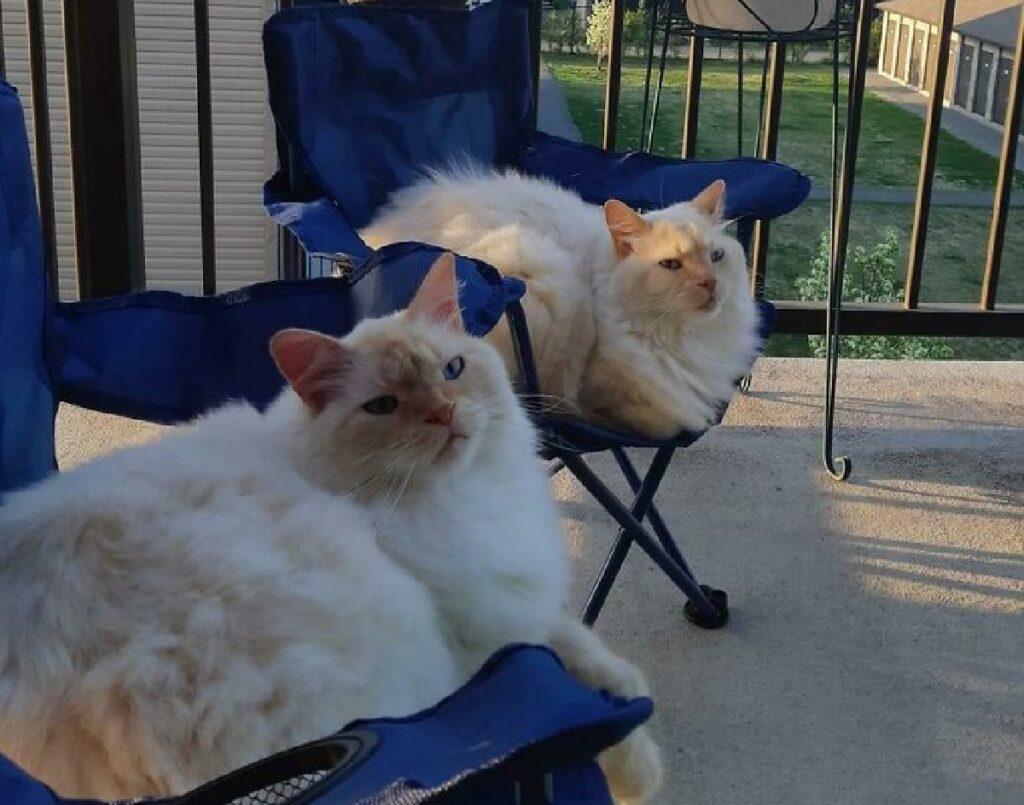 fratelli seduti su sedie gatti