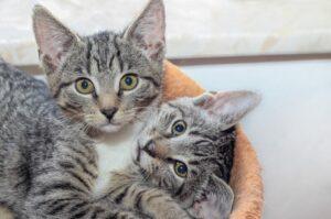 gatti che dimostrano quanto sia bella la loro unione