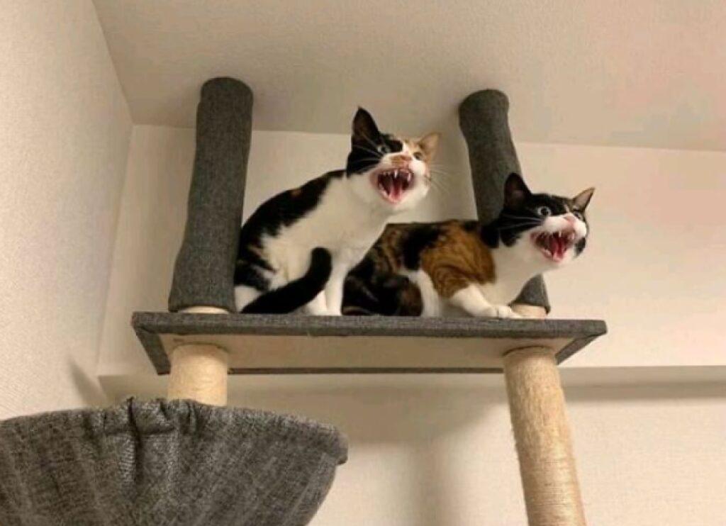 gatti protesta insieme casa