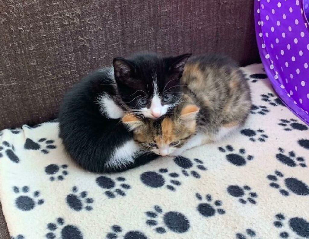 gatti rannicchiati assieme