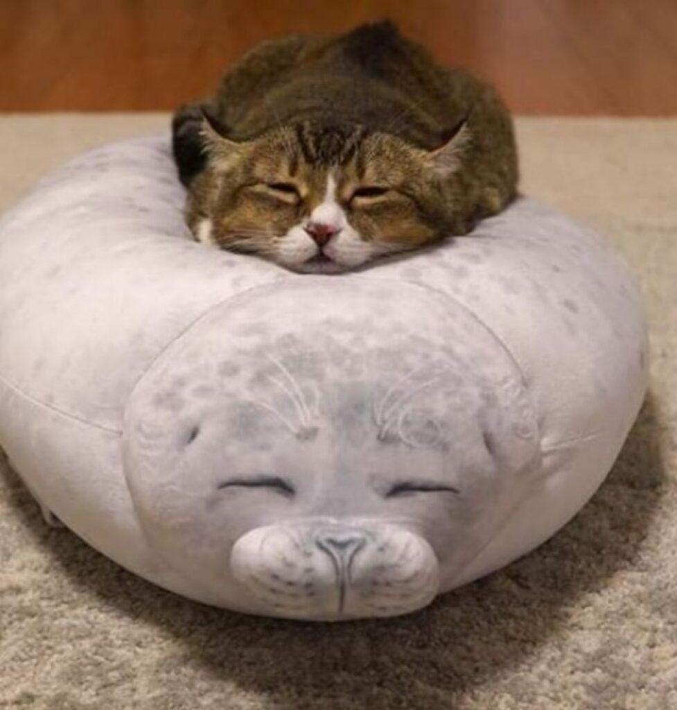 gatto dorme cuscino