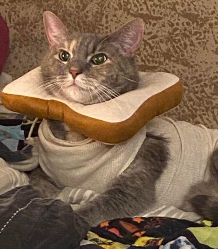 gatto pane fetta