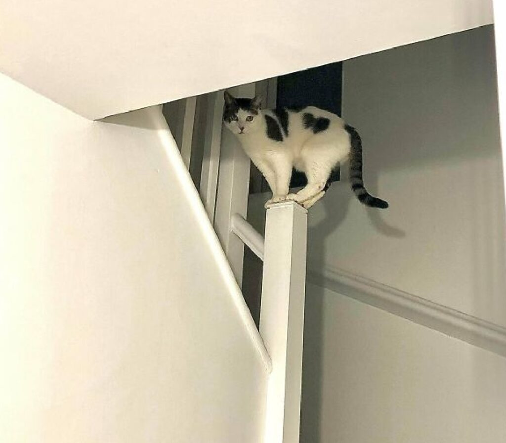 gatto osserva vita di casa