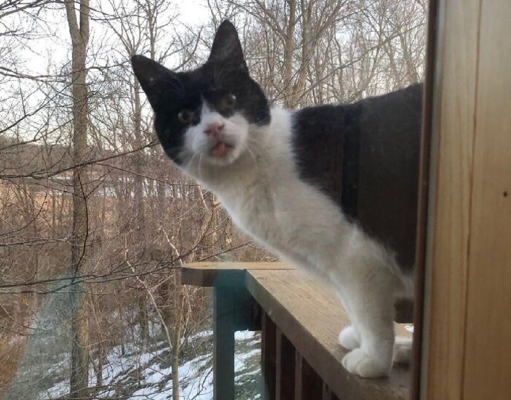 gatto bianco nero chiuso fuori