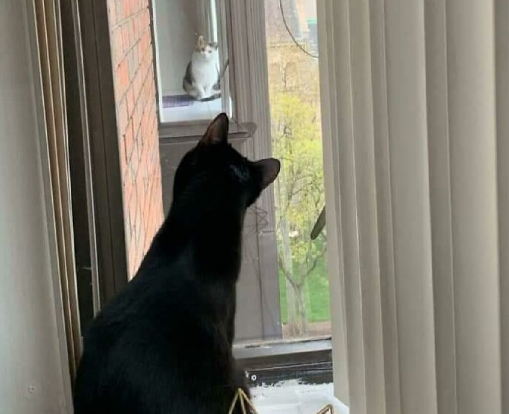 gatto guarda al di la finestra