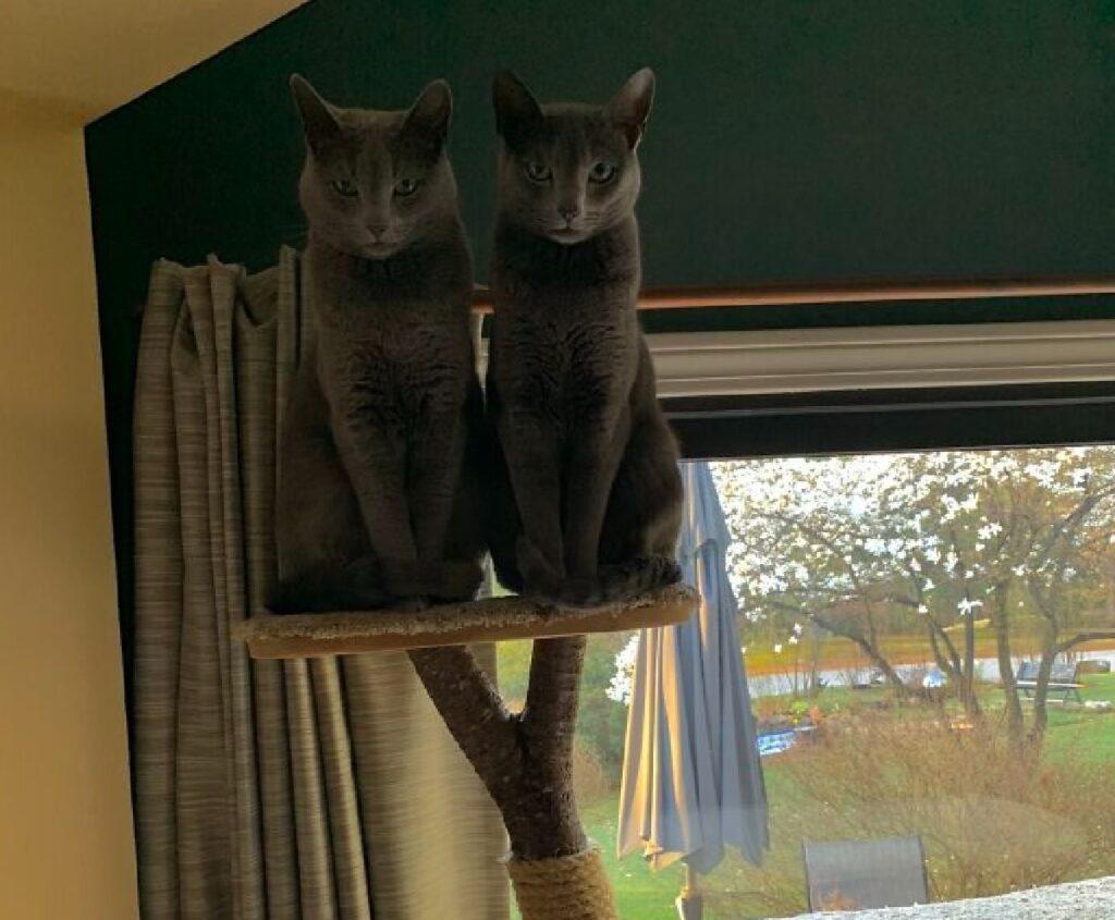 gatti sopra albero felino
