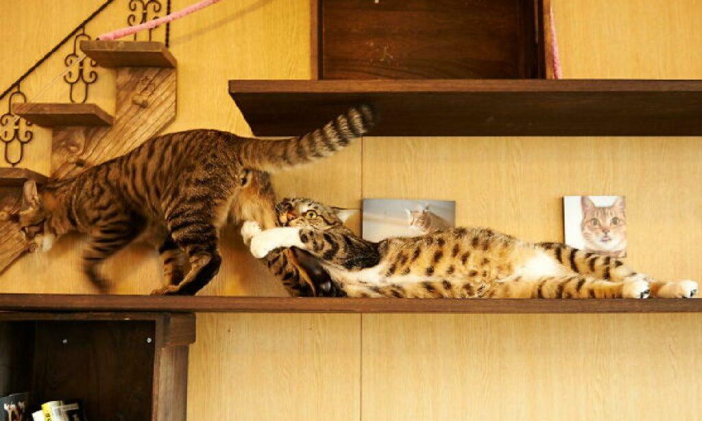 gatto non lascia andare amico