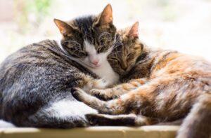 gatti che formano tandem unico