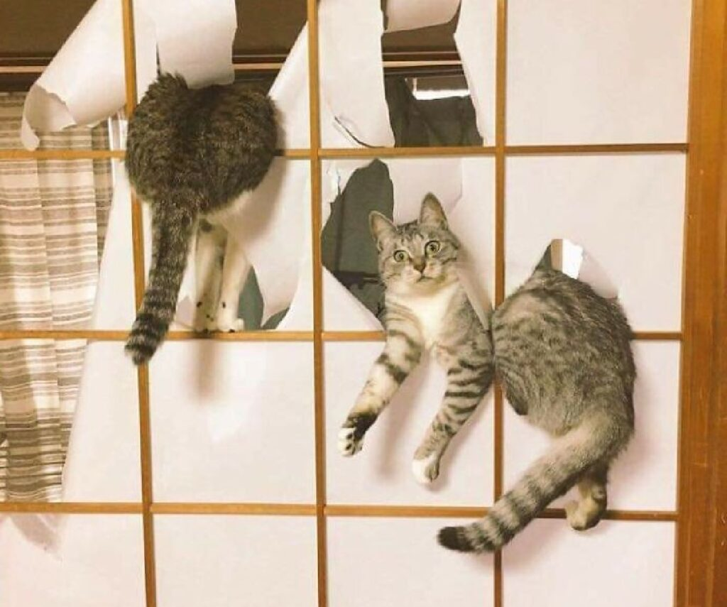 gatti combinano guai porta