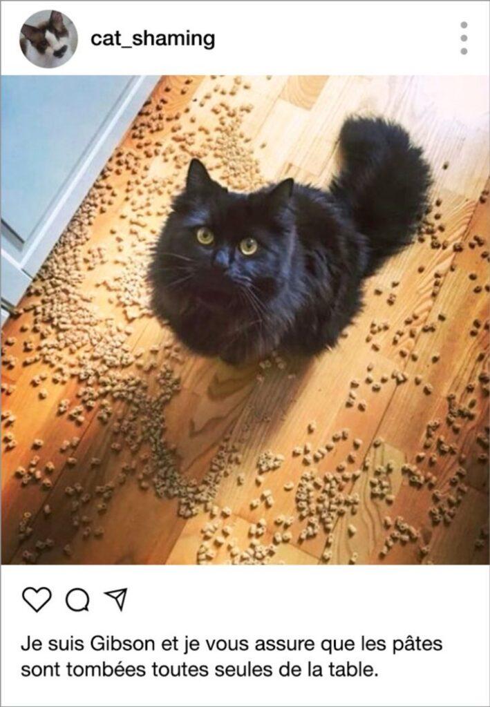 gatto crocchette pavimento
