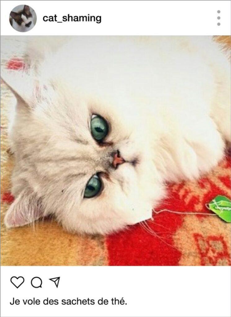 gatto nasconde the