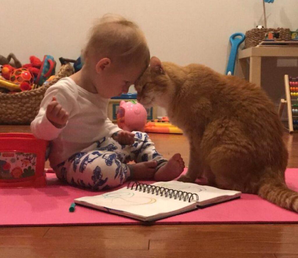 gatto bambina testa a testa