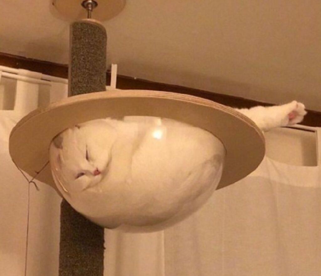 gatto dentro bolla vetro