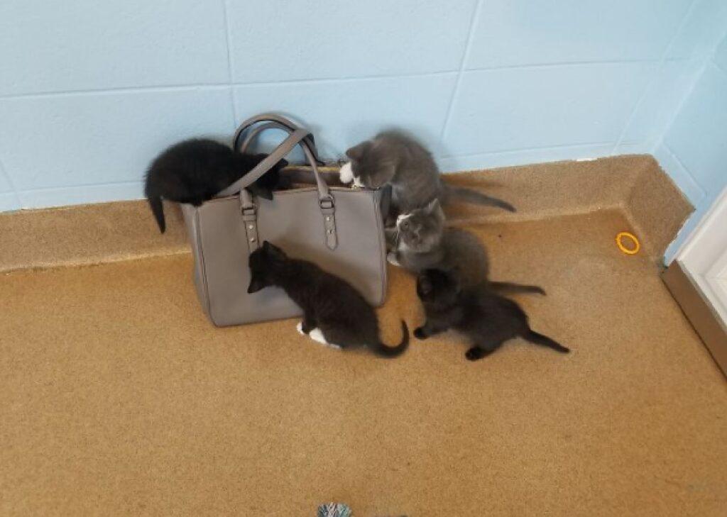 gattini invadono borsa mamma