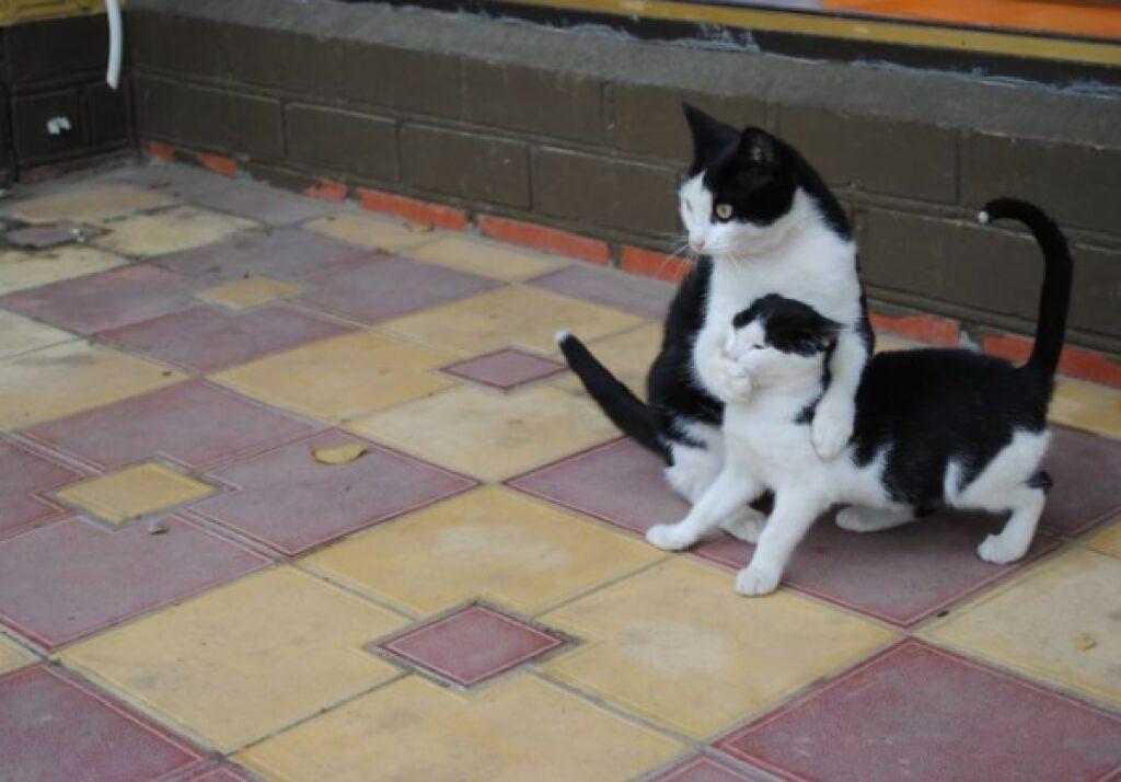gatto ferma amico da dire qualcosa