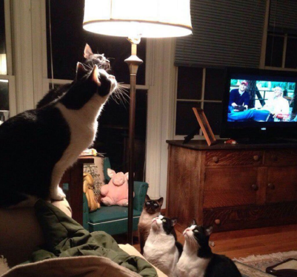 gatti lampada funzionamento