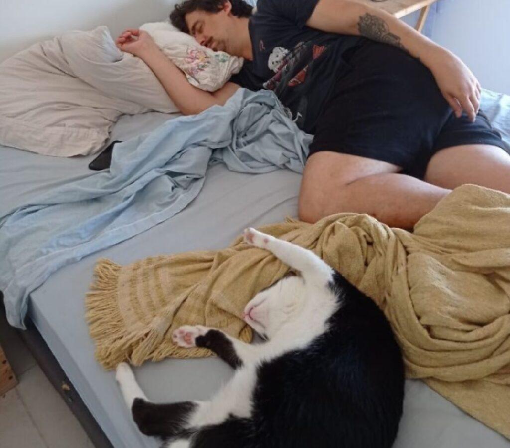 gatto si muove anche quando dorme