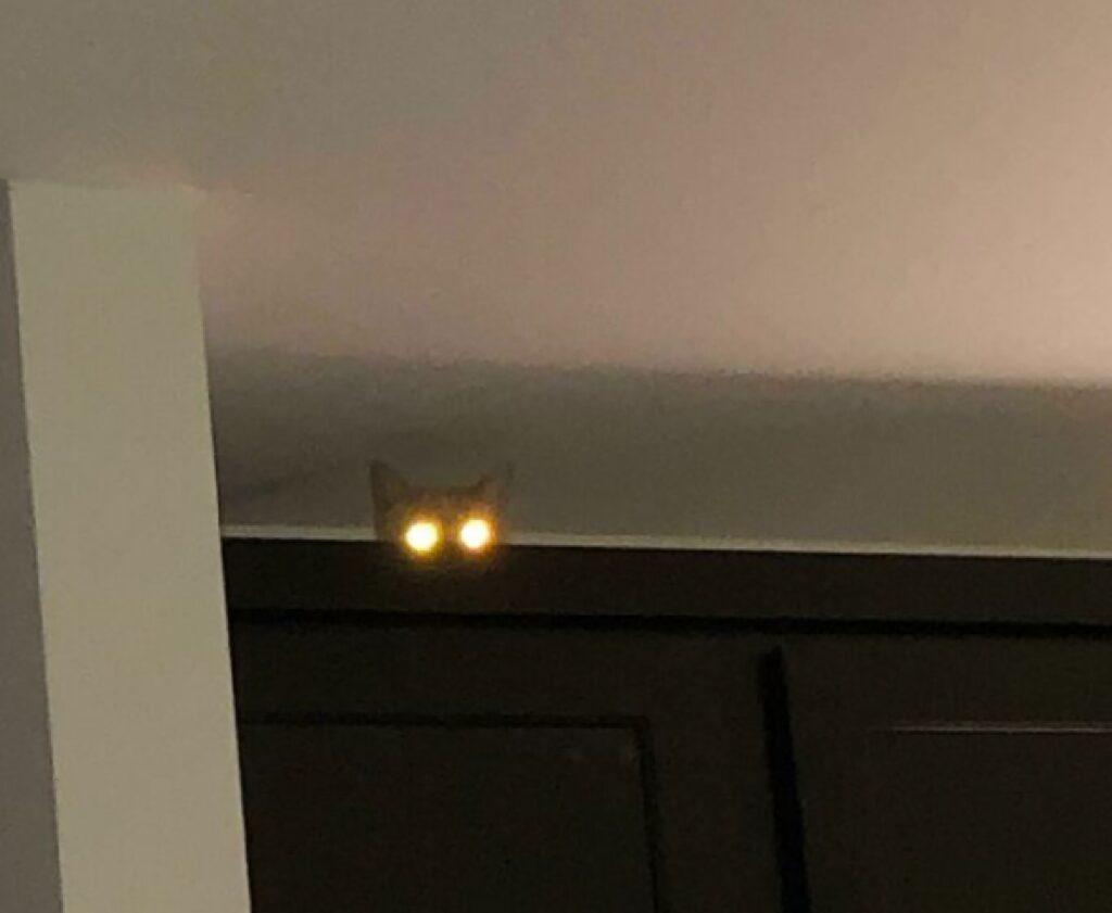 gatto paura occhi sbarrati