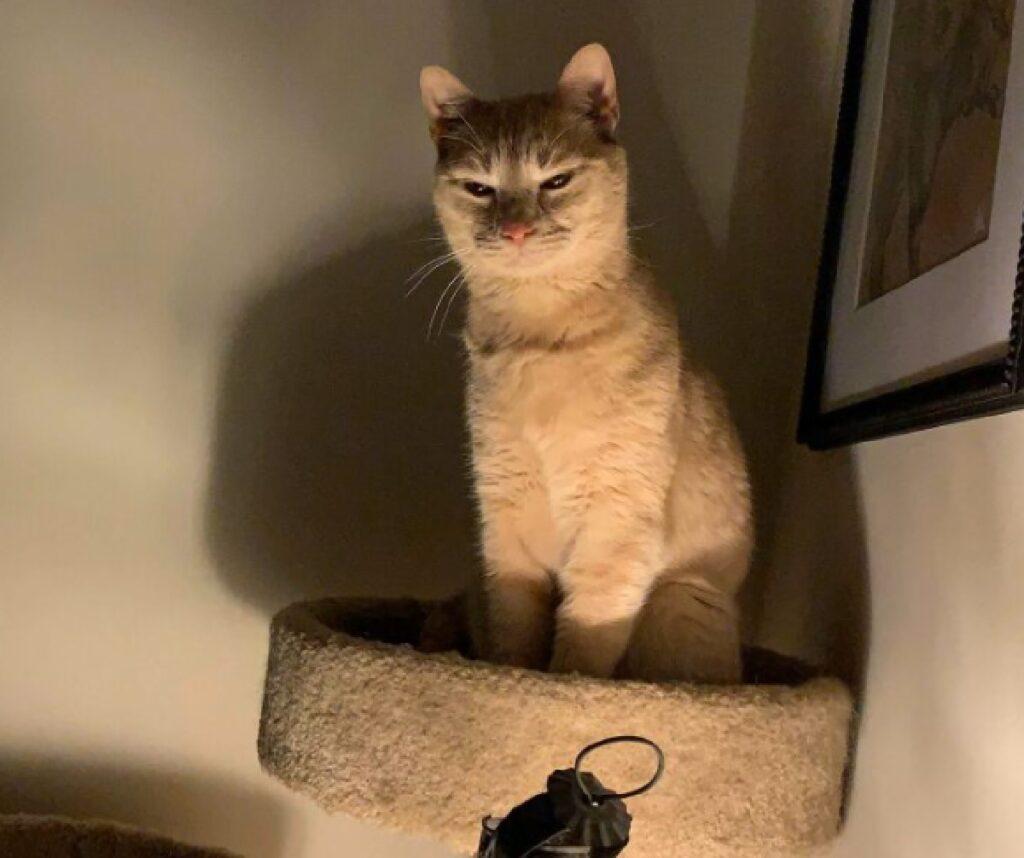 gatto luce al punto giusto