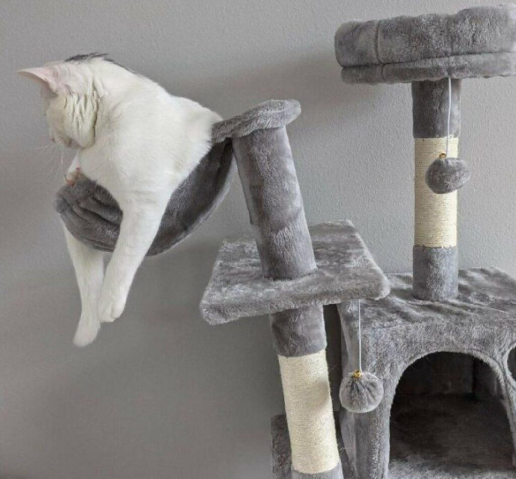 gatto pesa troppo per albero