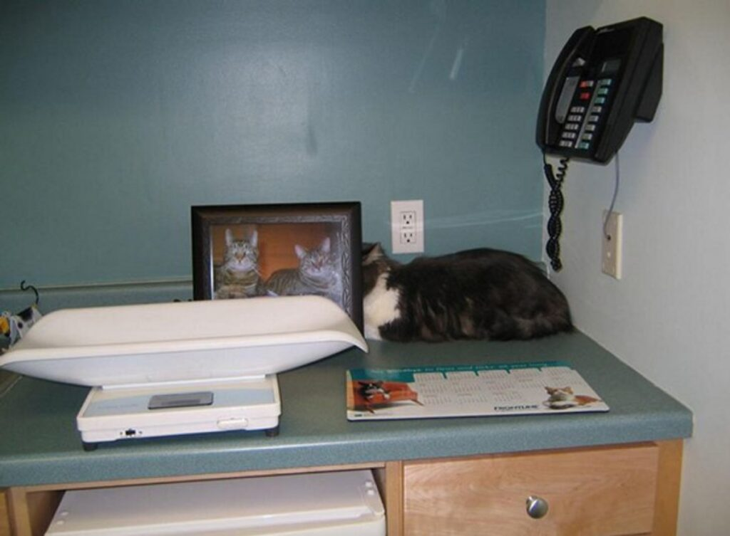 gattino fotografie dietro