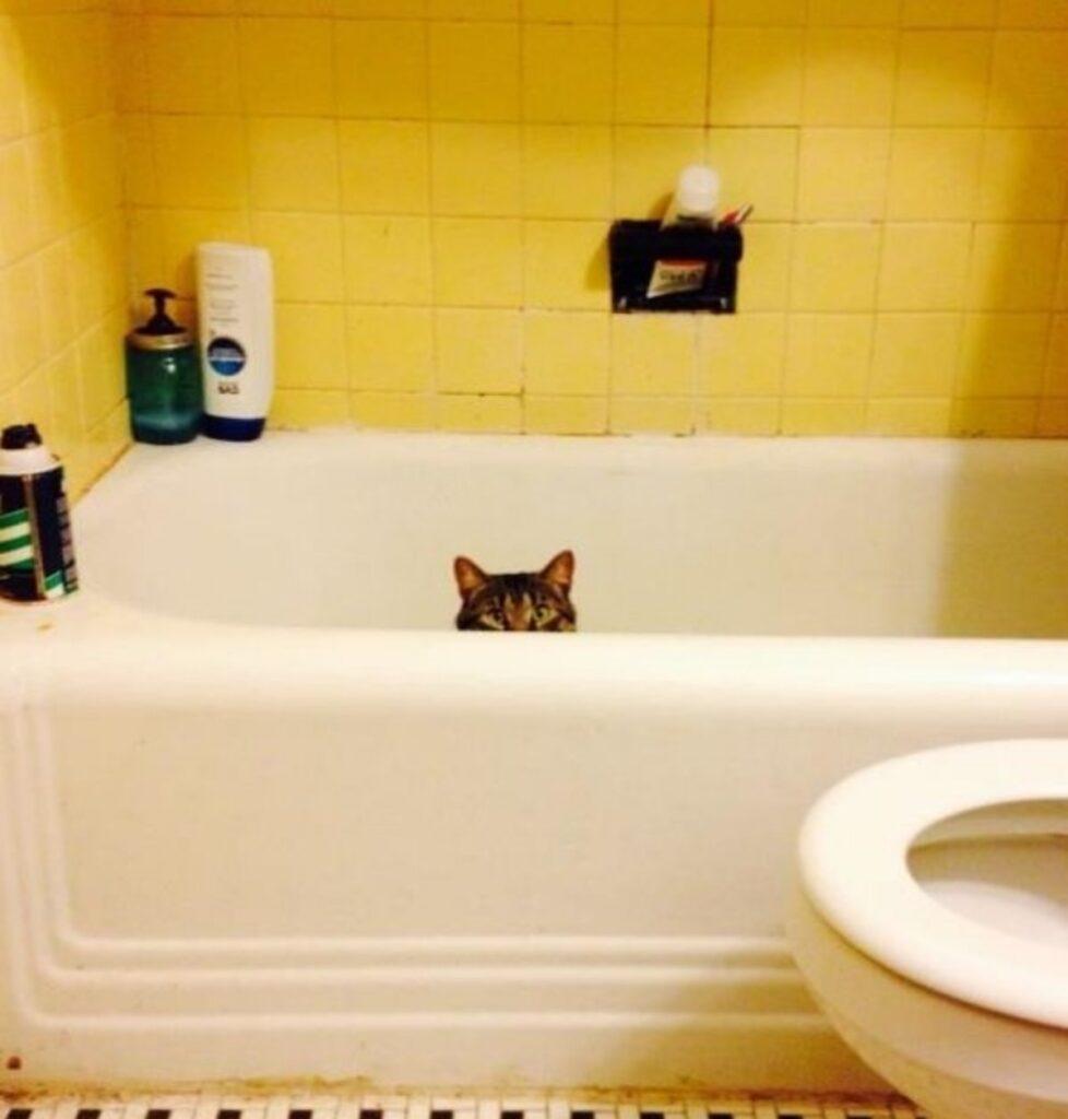 gatto vasca bagno