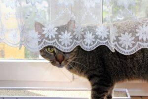 gatto nascondere tenda