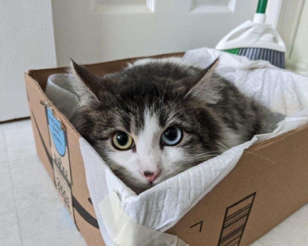 gatto dentro scatola occhi