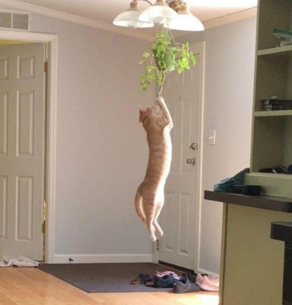 gatto pianta lampadario