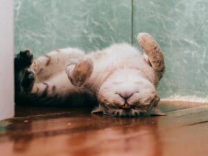 gatto sotto sopra