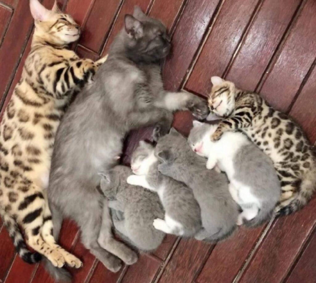 gruppo gatti sonnellino assieme