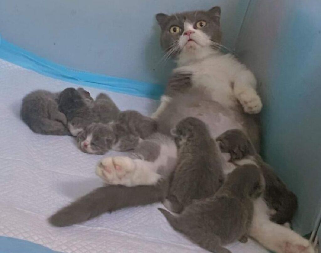 gatto con suoi piccoli difficoltà