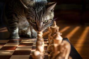 gatti che non sanno cosa fare in situazioni