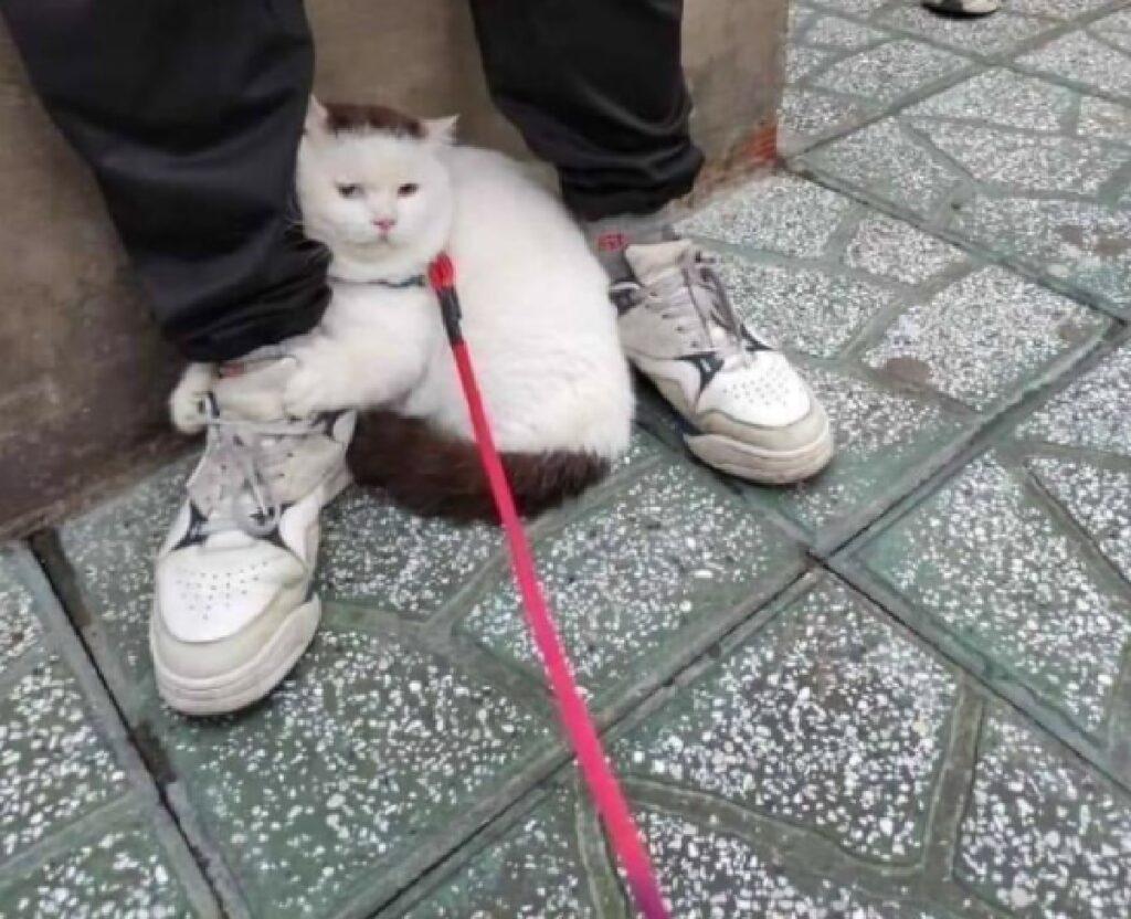 gatto bianco nero gamba