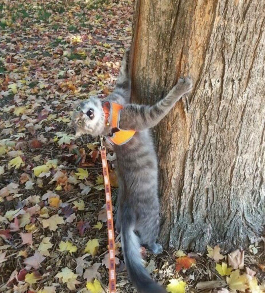 felino tronco miagola