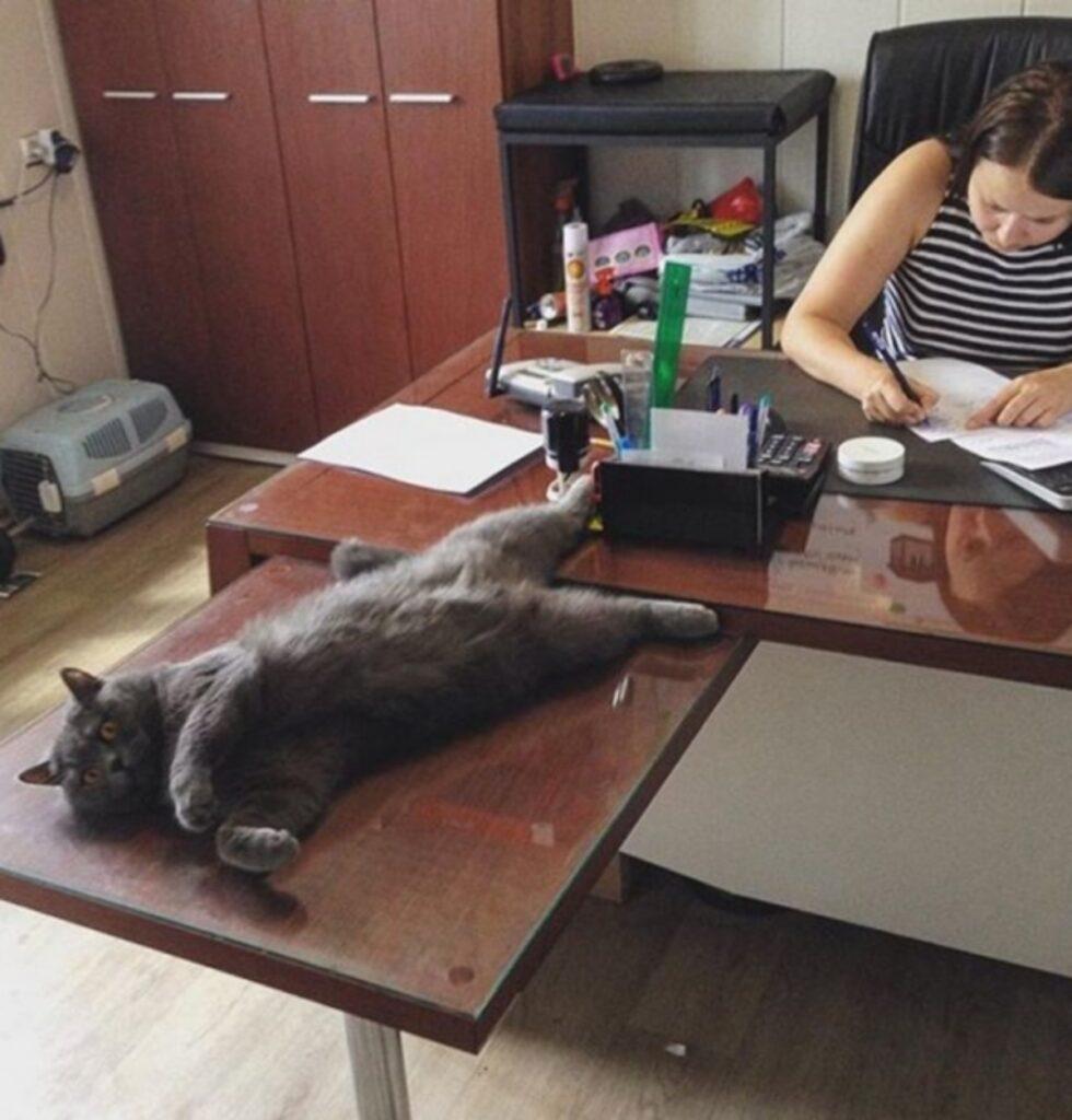 micio ufficio scrivania