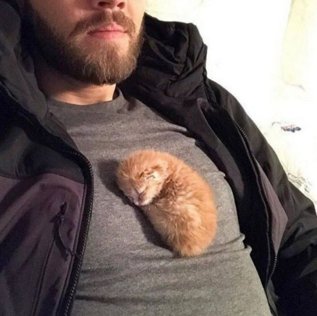minuscolo micio dorme