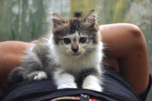 gattino dolce gambe