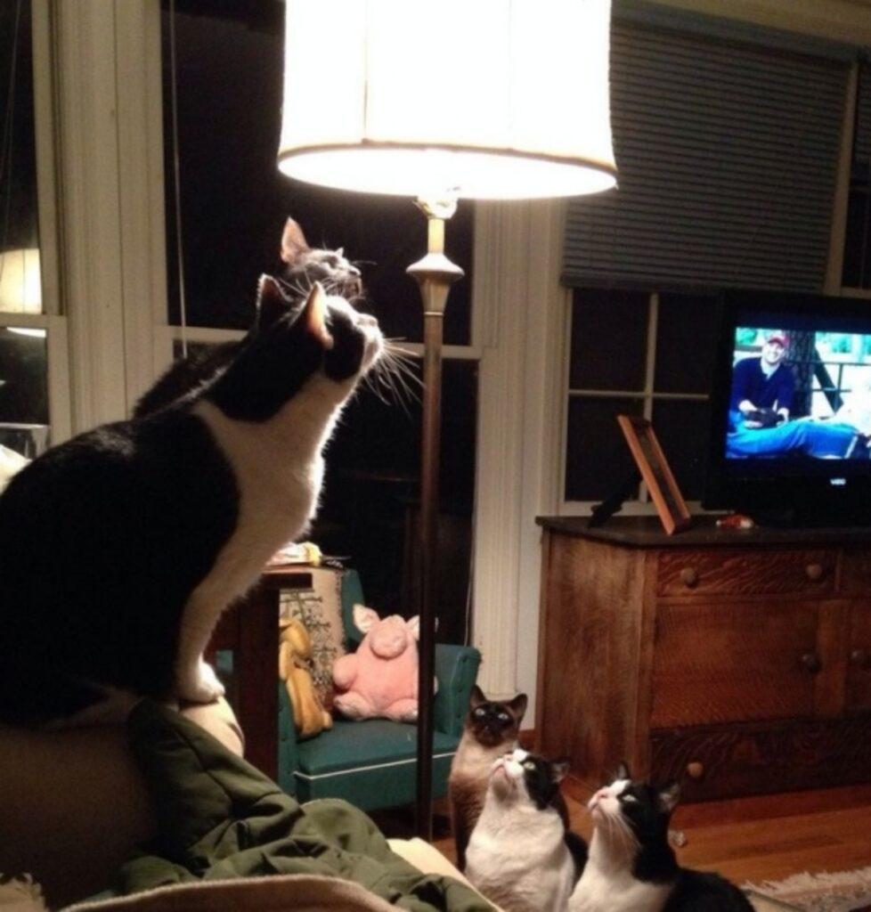 gatti lampada interesse