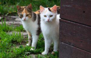 gatti che vi convinceranno ad adottarne due