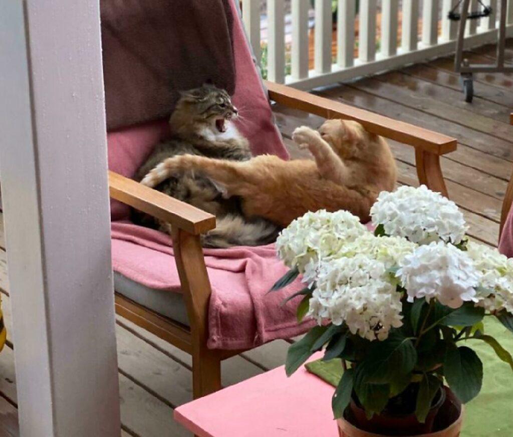 gatti scena di vita quotidiana